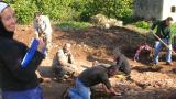 un momento degli scavi di cinquefrondi