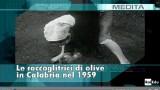 doc rai raccoglitrici olive 1959
