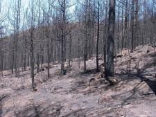 incendi roccaforte del greco