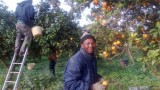migranti raccolta agrumi