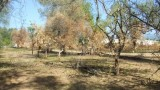 parco archeologico medma